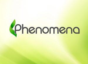 Web3D | עיצוב לוגו | מיתוג עסק: פנומנה
